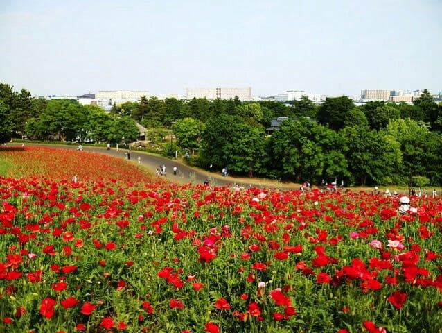 国営昭和記念公園を全て見て回るには2万歩は必要かと