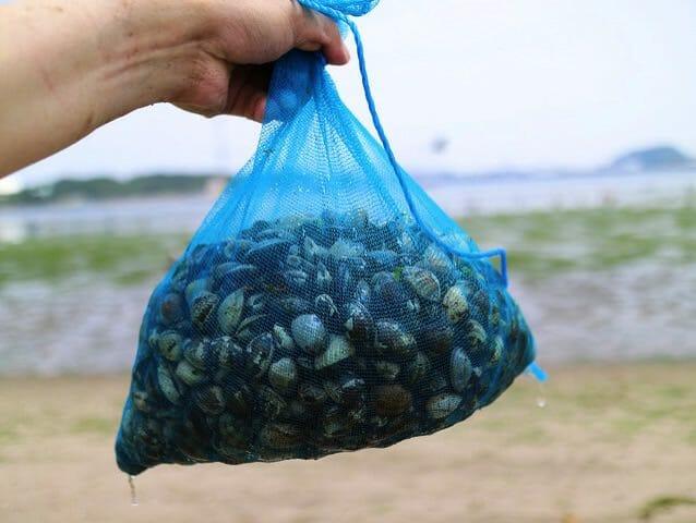 東京近郊で安く潮干狩りできる海の公園はとってもオススメだ