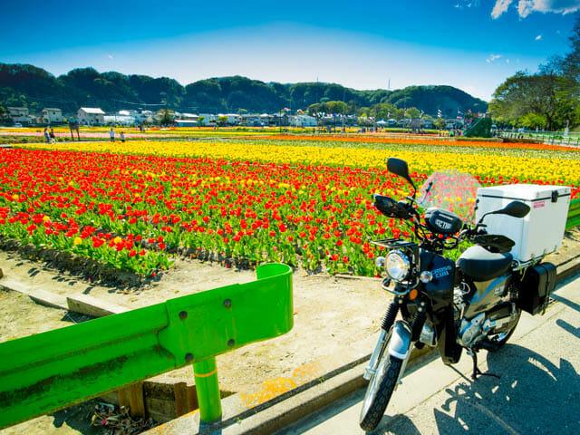 関東最大級でありながら入場無料のチューリップ畑を見てきた