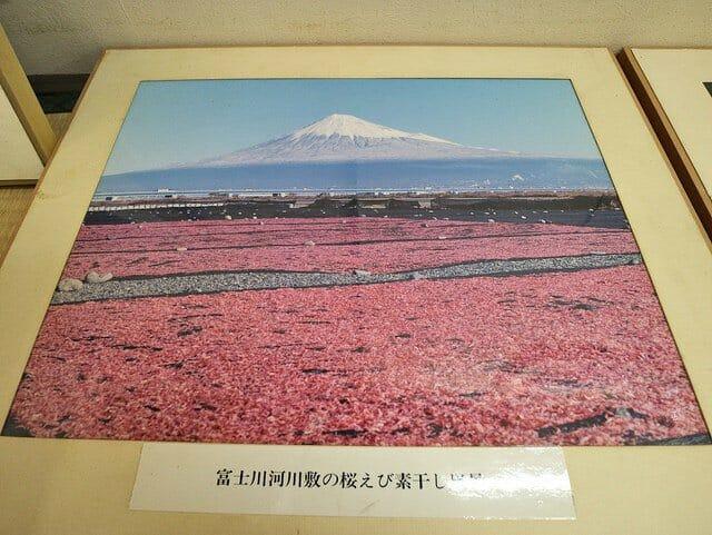 ゆい桜えび館 桜えび資料 富士山