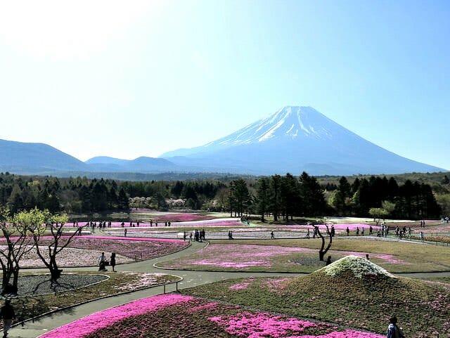 芝桜まつり小富士
