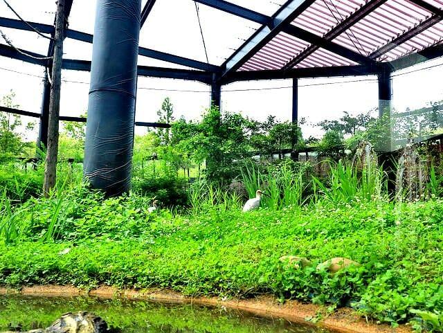 佐渡島トキの森公園トキふれあいプラザトキ