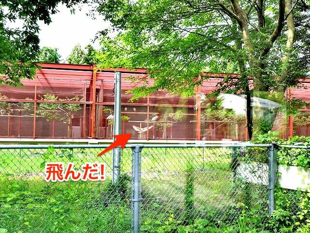佐渡島トキの森公園繁殖ケージ羽ばたき