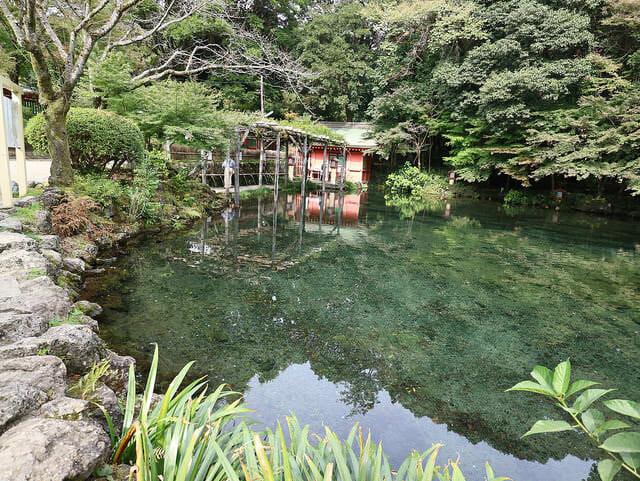 富士宮浅間大社湧玉池透明度