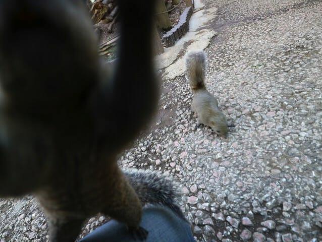 町田リス園リス放し飼い広場リスカメラ噛みつき