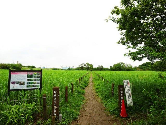 桜草公園通路