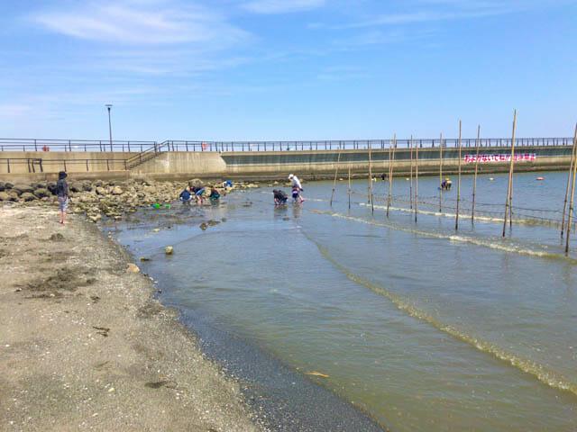 潮干狩り東扇島東公園 人工海浜潮干狩り状況