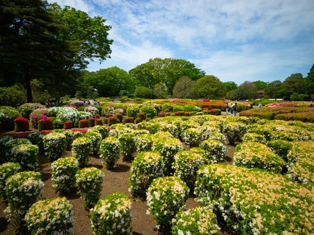神代植物公園 つつじ園3
