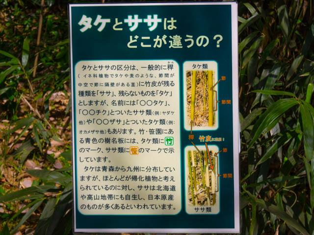 神代植物公園 タケとササの違い